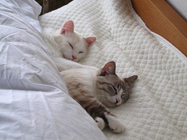 ストレス予防は睡眠が重要